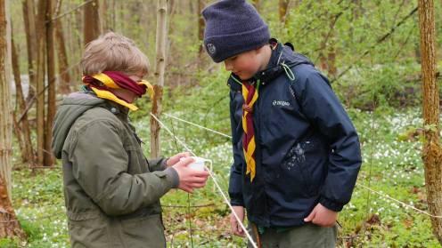 samarbejde i en skov